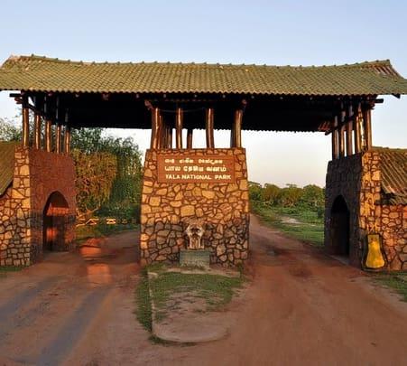 Yala Safari Day Tour
