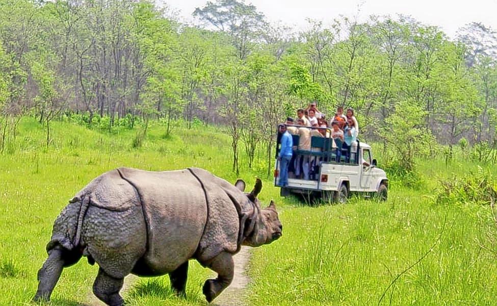 1559219742_1559045370_one-horn-rhino.jpg.jpg