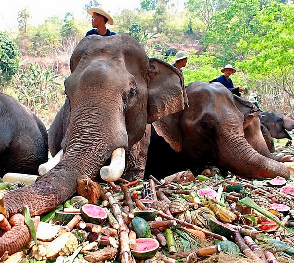 Elephant Ride and Trekking in Pattaya