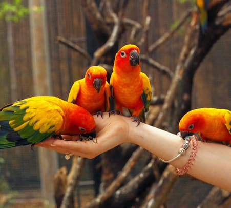Phuket Bird Park Ticket