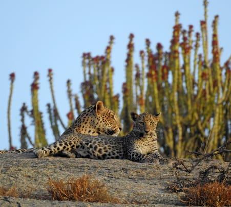 Bera Leopard Safari and Camping, Jodhpur