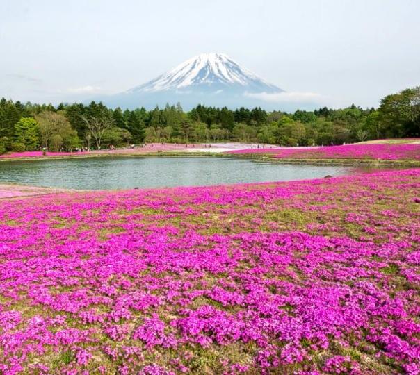 Tour of Hakone, the Gateway to Mt. Fuji in Japan