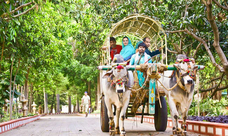 Take A Ride In A Bullock Cart