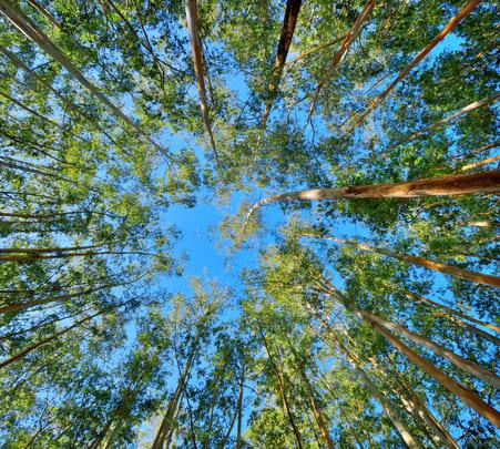 Dark Forest Trekking in Munnar Flat 23% off
