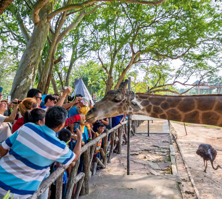 Khao Kheow Open Zoo Ticket Flat 30% off