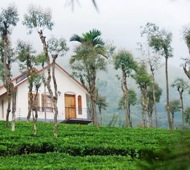 Wayanad Tea Plantation Stay Experience
