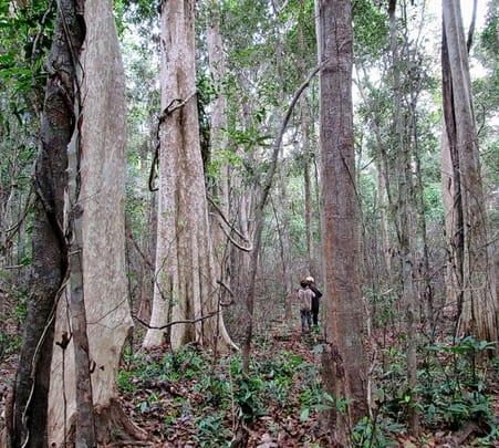 3 Days Trek to Virachey National Park in Cambodia