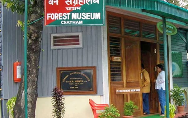 1487852330_forest_museum.jpg