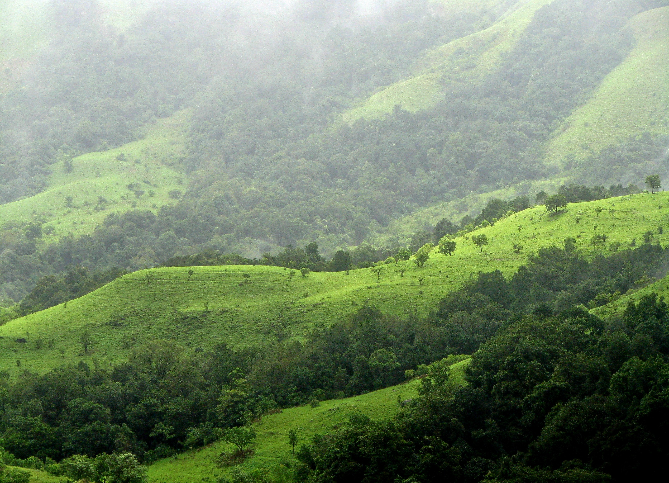 Shola_grasslands_and_forests_in_the_kudremukh_national_park__western_ghats__karnataka.jpg