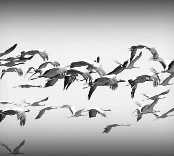 Birding Kerala Package