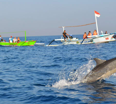 Snorkelling and Dolphin Watching Private Tour in South Bali
