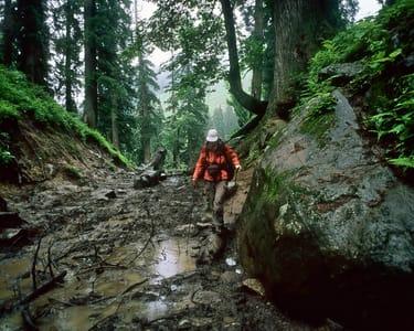 Mathikettan Shola Rainforest Trekking Experience, Munnar