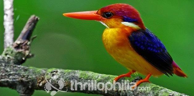 Birds-thattekkad-sanctuary-3_kerala.jpg