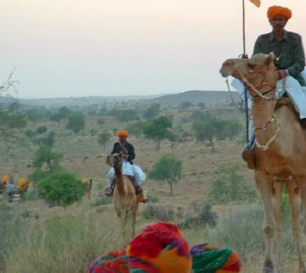 Half Day Camel Safari in Jodhpur