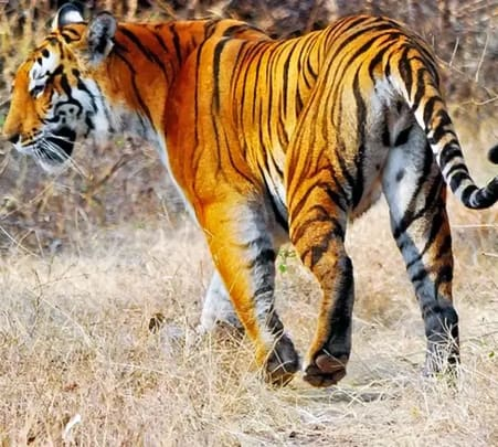 Day Trip to Ranthambore Flat 27% off