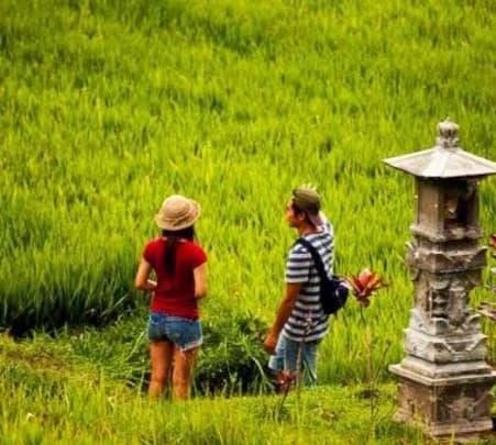 Paddy Field Trekking to Jatiluwih near Ubud