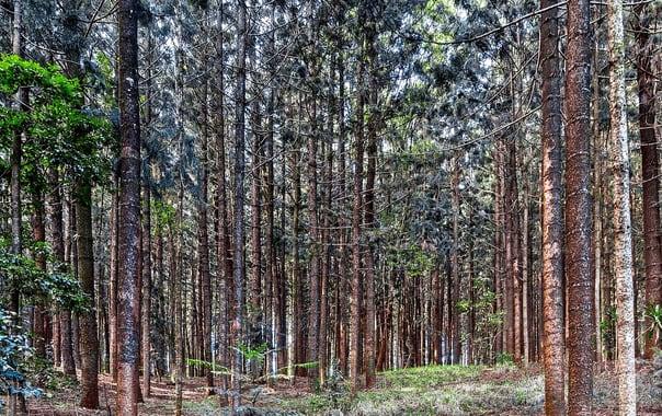 1481609145_1280px-karura_forest_nairobi_04.jpg