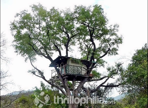 Tree-house-chinnar-kerala.jpg