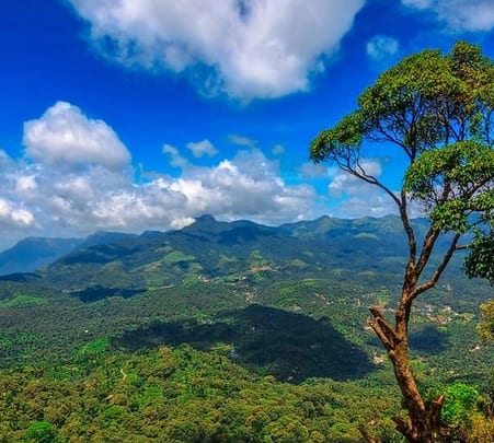 Adventure Day Out in Wayanad