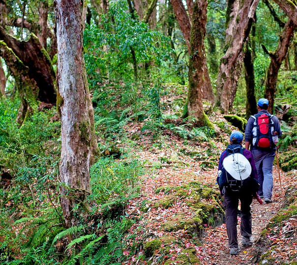 Namdapha Wildlife Trek