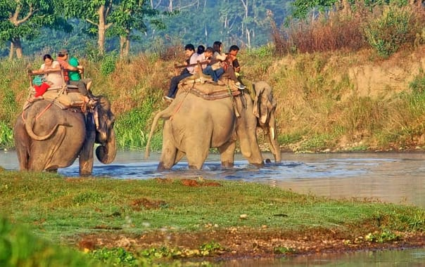 1564730008_jungle_safari_chitwan.jpg.jpg.jpg