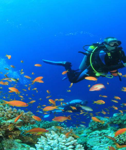 1513664491_scuba-diving_1446210316.jpg