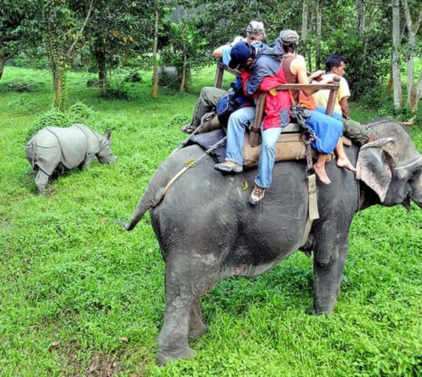 Go Wild at Kaziranga with Nature Hunt Eco-Camp