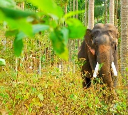 Wildlife Safari at Tholpetty Wildlife Sanctuary in Wayanad