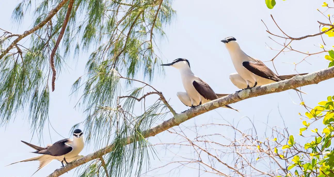 1573120664_birdworld_cairns1_klook.png