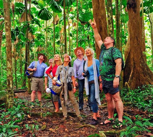 Wildlife Tour in Cairn's Rainforest
