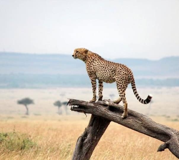Maasai Mara and Lake Nakuru Tour in Kenya