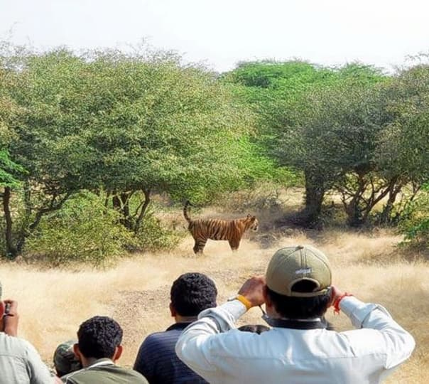 Jeep Safari in Tiger Machan, Ranthambore