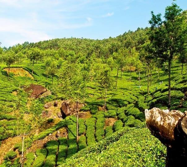 Green Glade Kerala