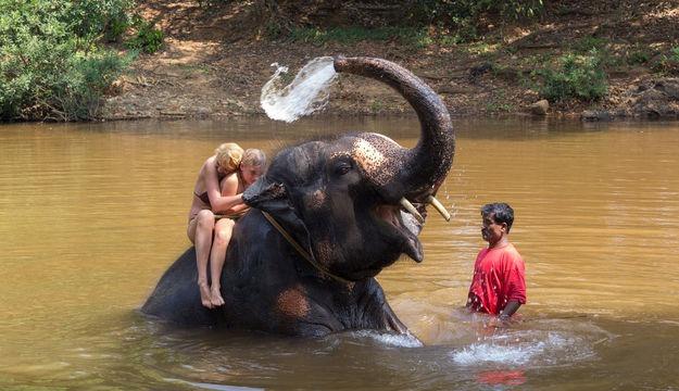 1467640908_elephant-ride-and-splash-in-goa-preset3.jpg