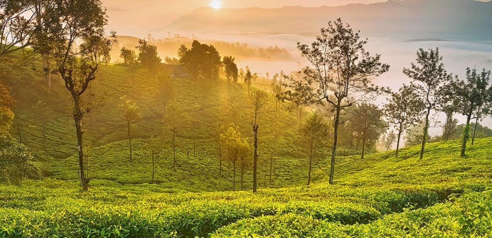 55 Places to Visit in Ooty - 2019 Updated (Attractions & FAQ's)
