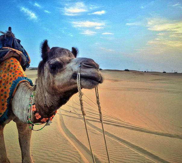 Half Day Camel Safari in Jaisalmer