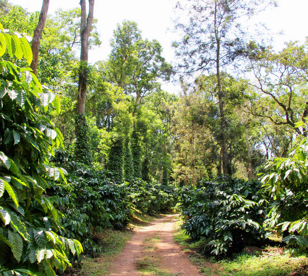 Nature Walk in Coorg
