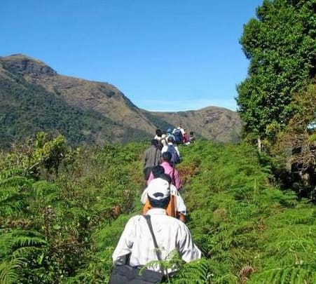 Tea Plantation Trek In Munnar