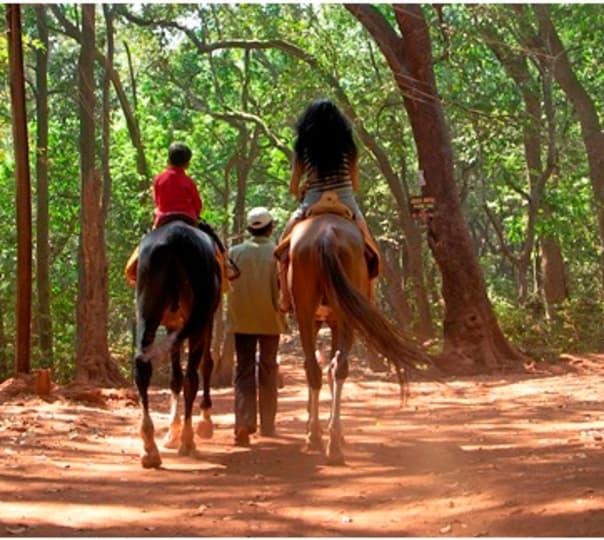 Horse Safari at Jaipur in Rajasthan