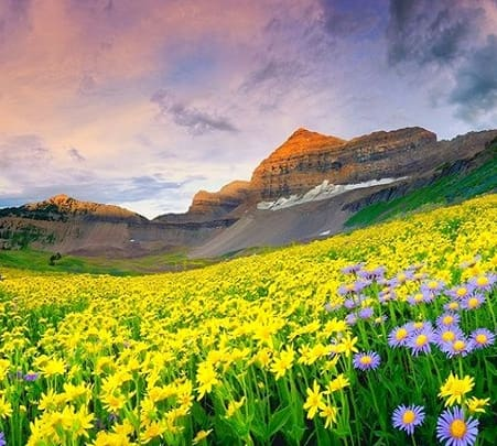 Valley of Flowers Trekking Packages, Uttarakhand