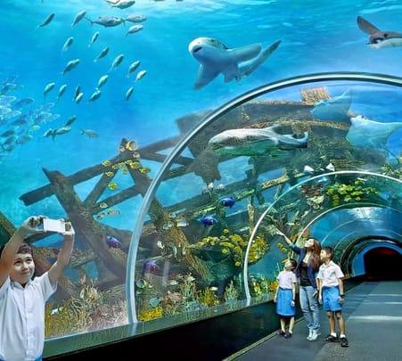 Combo: Singapore Zoo with S.e.a. Aquarium Flat 10% off