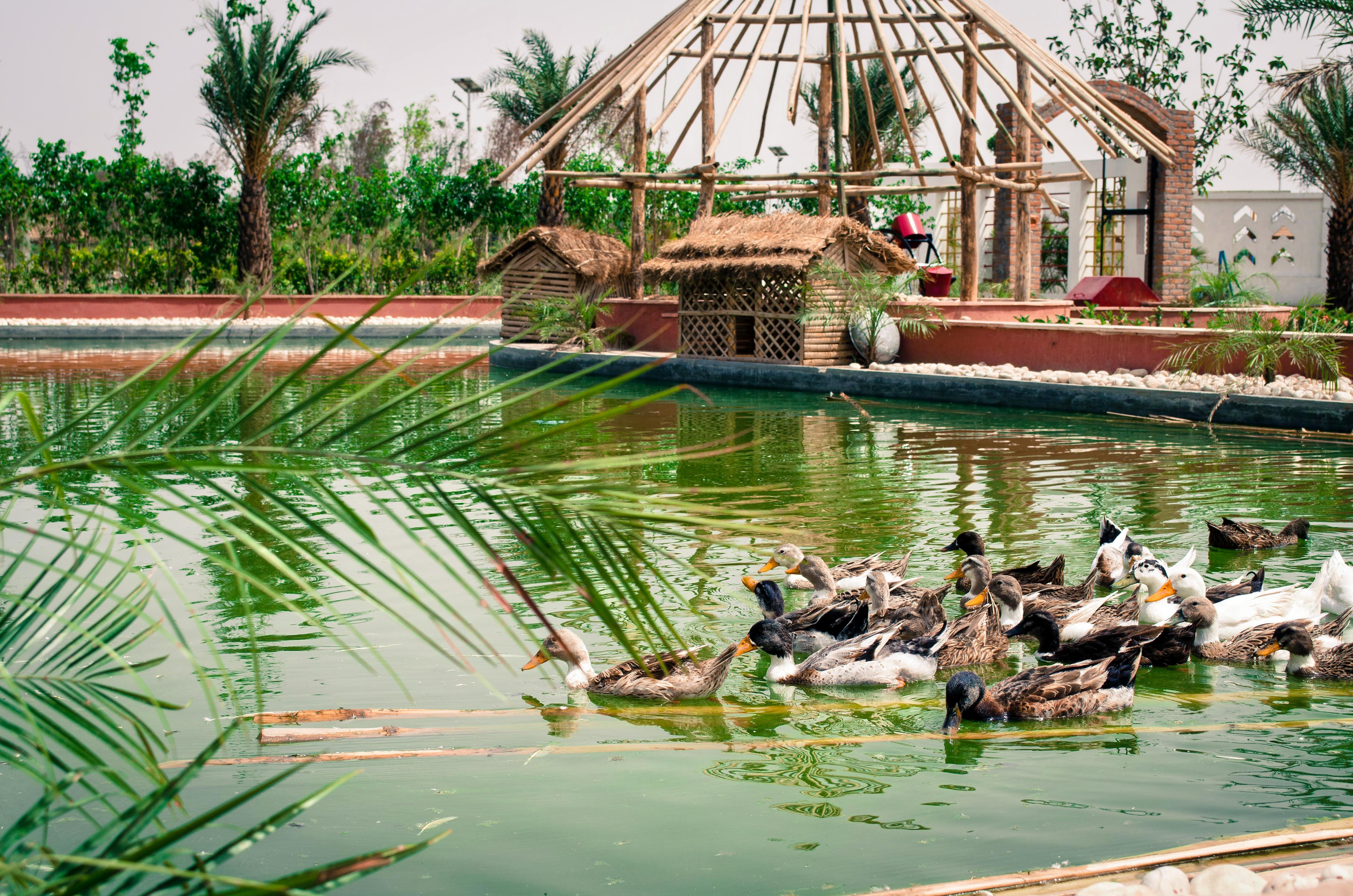 1540382314_duck_lake_.jpg