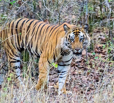 Short Trip to Bandhavgarh National Park
