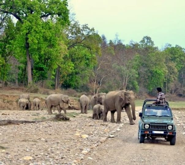 Night Stay and Jungle Safari at Rajaji National Park