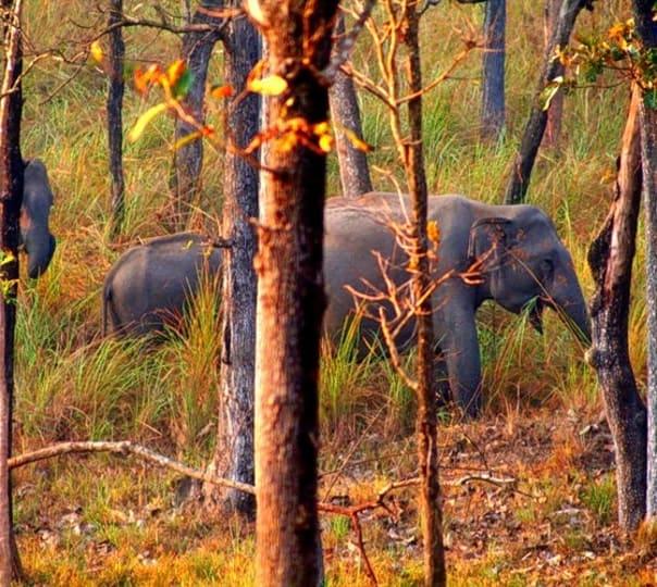 3 Days Wildlife Adventure in Kerala