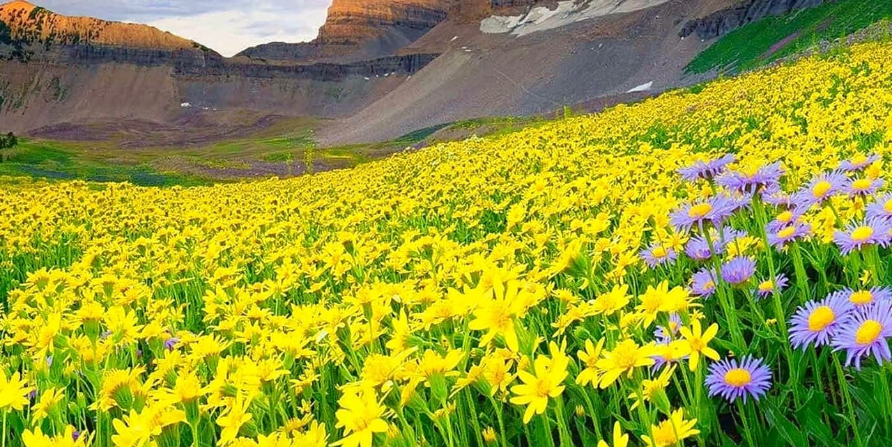 Valley Of Flowers Uttarakhand How To Reach Best Time Tips