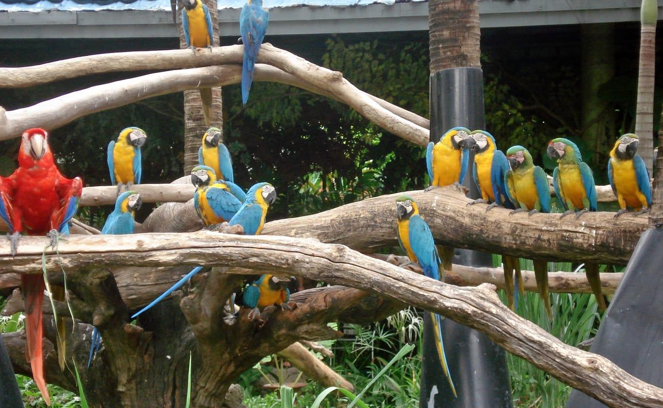 Bangkok Safari World Zoo Tours