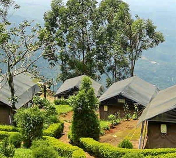 Stay at Royal Safari Tent in Munnar