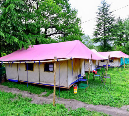 Camp Stay Amidst Wilderness in Manali