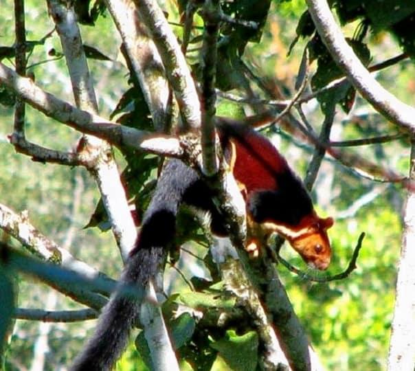 Chimmony Wildlife Sanctuary